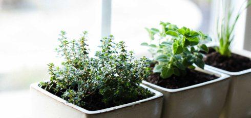 How-to-Start-an-Indoor-Herb-Garden-kitchenconfidante.com